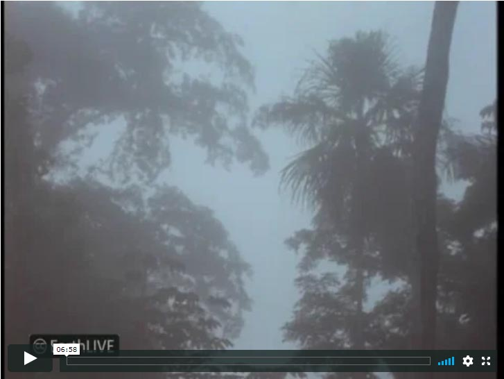 Rainforest Foggy Morning Belize Video